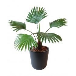 Fan Palm Mini artificiel 35 cm de haut composé de 5 feuilles en tergal