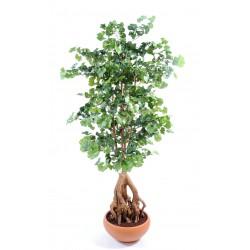 Ginkgobiloba artificiel Root