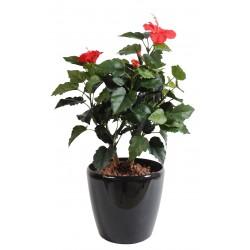Hibiscus Rouge 150 cm