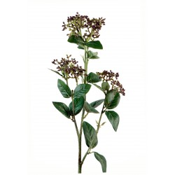 Vibernum Vert/Blanc
