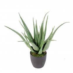 Aloe artificielle