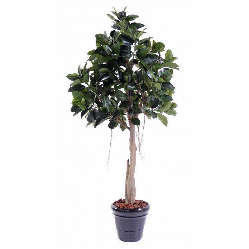 Rubber plant artificiel tree s de 220 cm de hauteur 100 cm for Caoutchouc plante exterieur