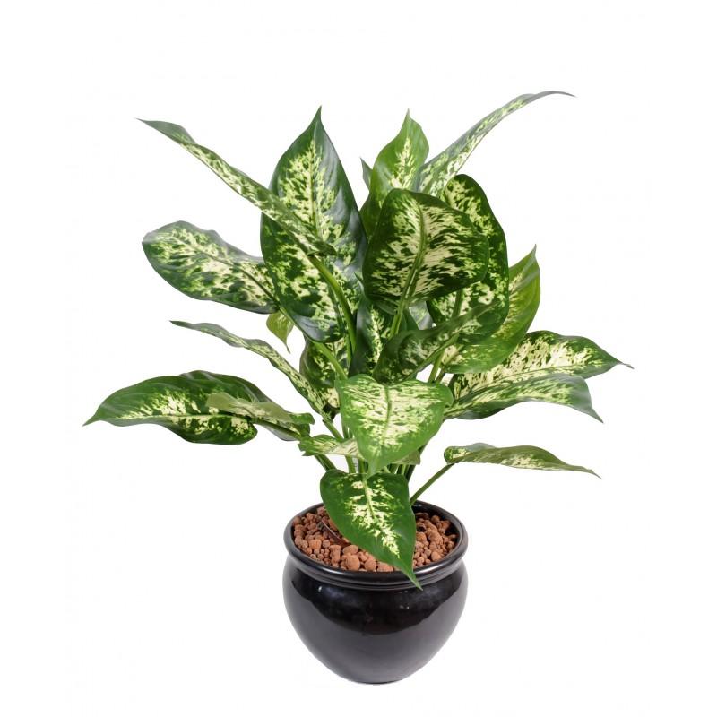 dieffenbachia artificiel en pot compos de 26 feuilles. Black Bedroom Furniture Sets. Home Design Ideas