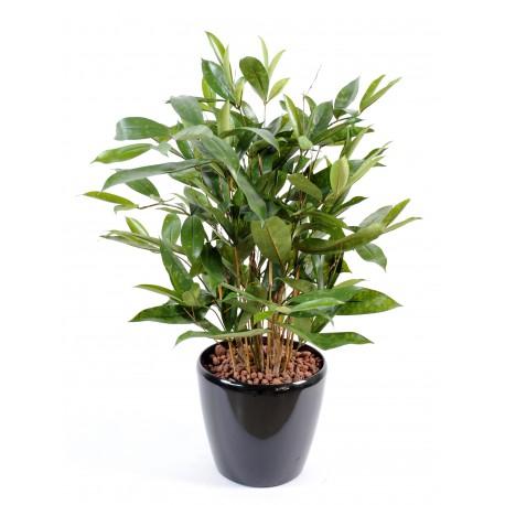 Dracaena artificiel surculosa en pot 60 cm de haute et 38 for Plantes vertes hautes