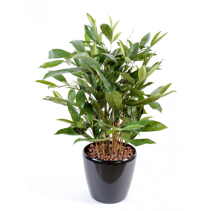 dracaena artificiel surculosa en pot 60 cm de haute et 38 cm de large. Black Bedroom Furniture Sets. Home Design Ideas