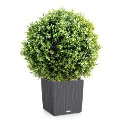 plantes artificielles haut de gamme achat prix 1000 v g taux sur flore. Black Bedroom Furniture Sets. Home Design Ideas