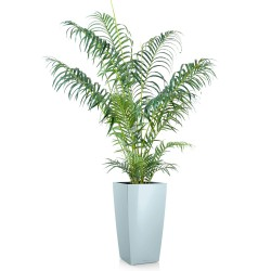 Areca artificiel en pot