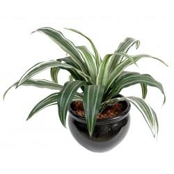 Draceana artificiel Warneki 20 feuilles