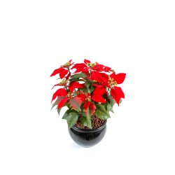 Poinsetia artificiel