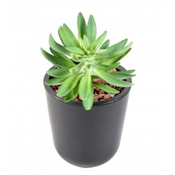 Succulente artificielle 16cm