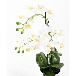 Orchidée Phalaenopsis pot *3