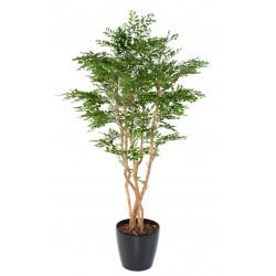 Acacia artificiel
