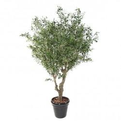 Olivier large à petites olives