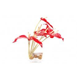 Composition artificielle d'anthurium rouge dans un vase en verre 35 cm de hauteur