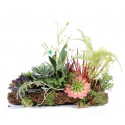 Composition Orchidée Succulent