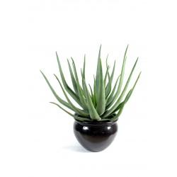 cactus artificiel 4 branches de 45 cm de hauteur. Black Bedroom Furniture Sets. Home Design Ideas