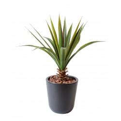 Aloe Vera Ferox pour extérieur de 45 cm de hauteur en piquet