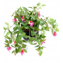 Fuchsia artificiel Chute