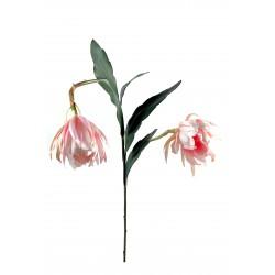 Tubrose Rhipsalis en tige de 1 mètre de hauteur 2 fleurs couleur rose