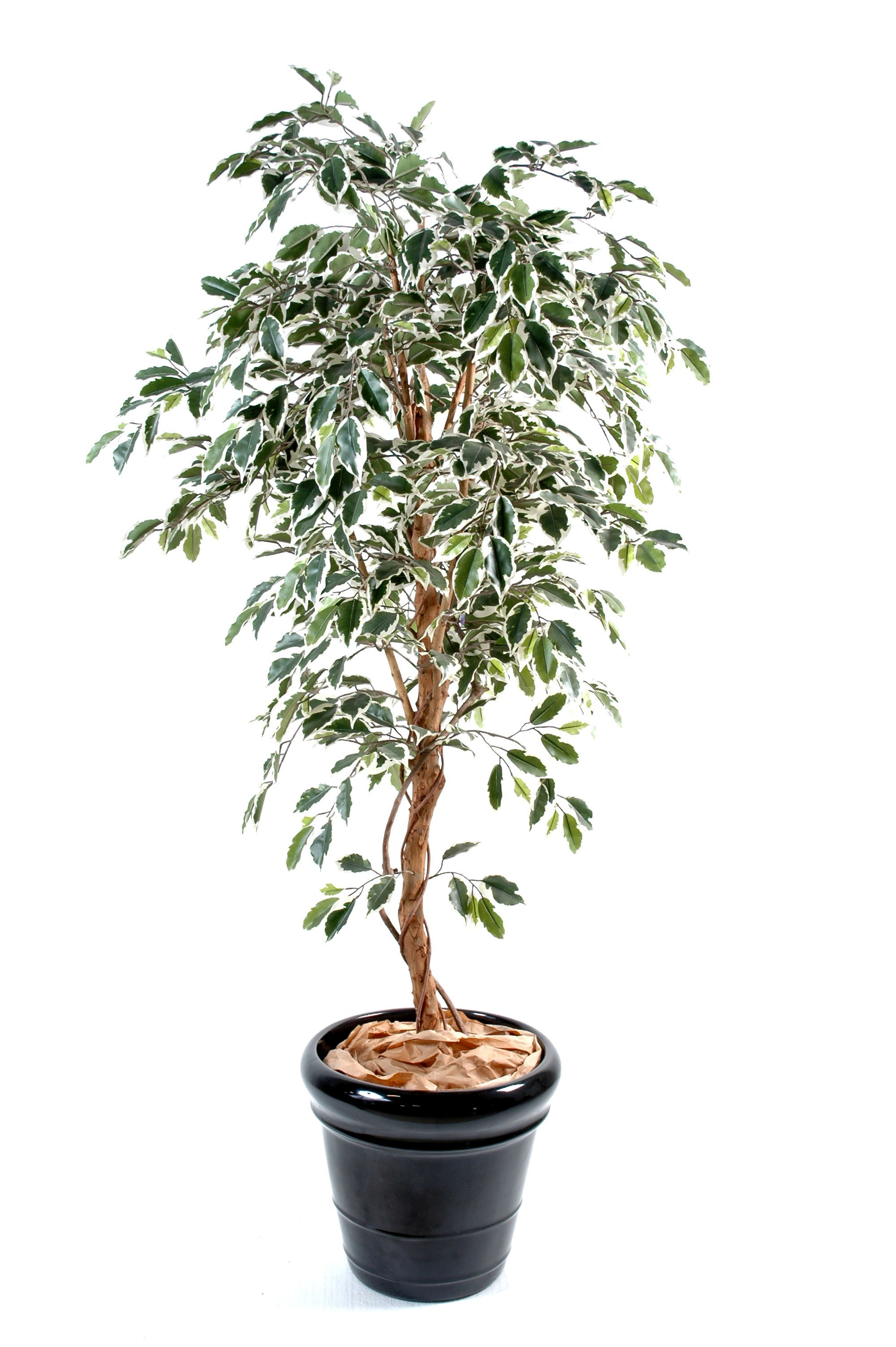 Ficus artificiel for Ficus artificiel
