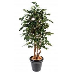 Ficus artificiel exotica