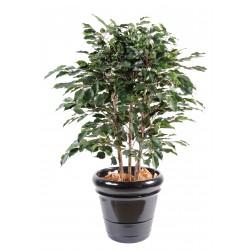 Ficus artificiel exotica buisson