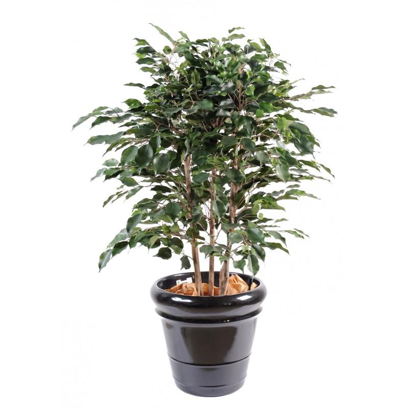Ficus artificiel buisson compos d 39 un tronc en bois - Entretien d un ficus ...