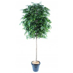 Ficus artificiel natasja tree