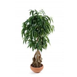 Ficus artificiel root longifolia