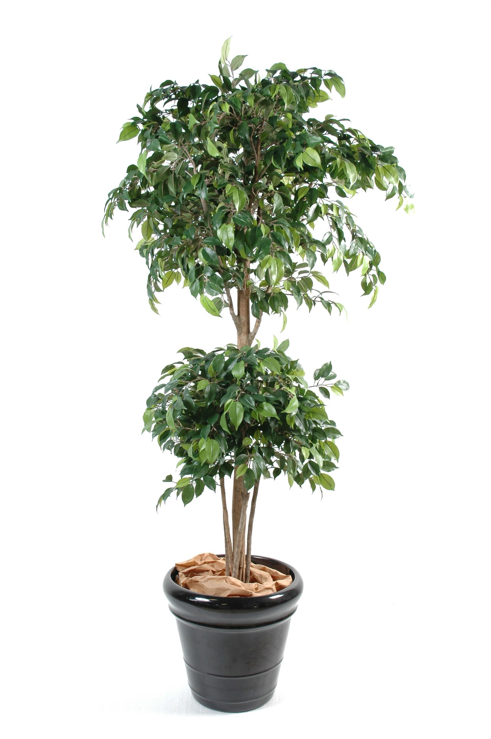 Ficus artificiel for Arbres artificiels interieur