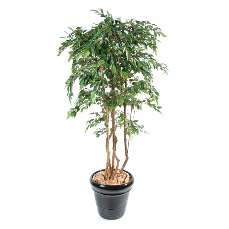 Ficus multitree natasja artificiel for Ficus artificiel