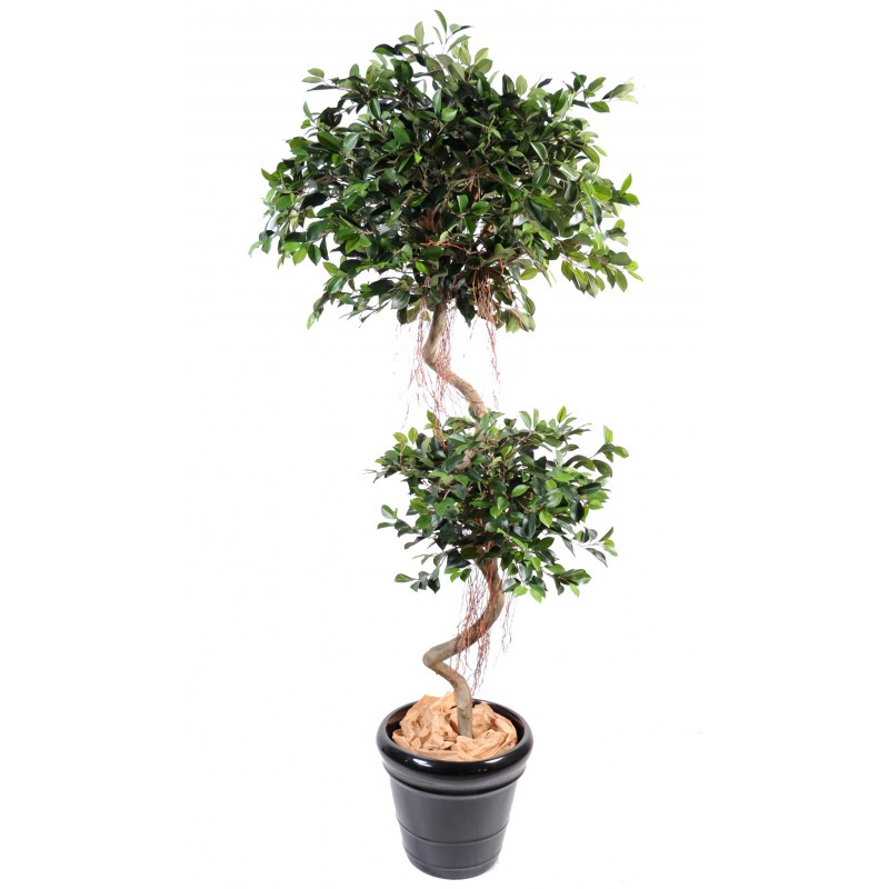 Ficus artificiel spirale 175 cm compos de 2 boules tronc for Ficus artificiel