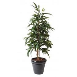 Ficus artificiel alii bush royal