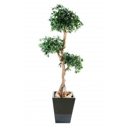 Ficus artificiel Retusa Crazy