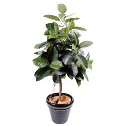 Ficus artificiel Elastica (Rubber Plant Tree)