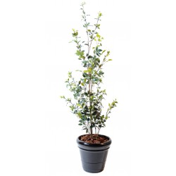 Ficus artificiel Buisson Plast