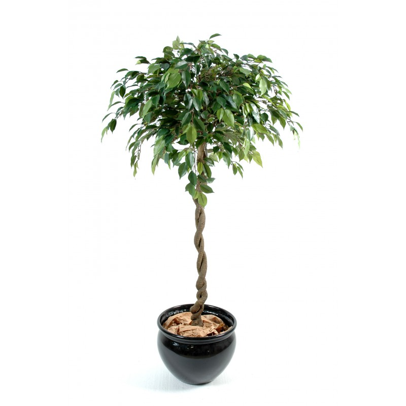 ficus boule natasja artificiel 140 cm de hauteur et 60 cm de diam tre. Black Bedroom Furniture Sets. Home Design Ideas