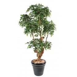 Ficus Natasja 5 têtes artificiel de 170 cm de hauteur