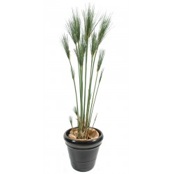 Papyrus Cyperus artificiel en pot