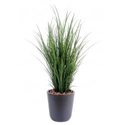 Herbe fine dans son pot PVC