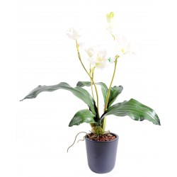 Piquet d'Orchidée Lycaste artificiel Blanc de 60 cm de hauteur et 25 cm de largeur