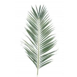 Palme palmier majesty 149 cm