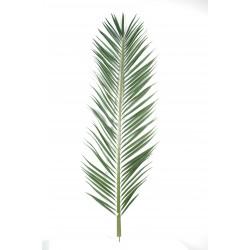 Palme palmier mascarena 220 cm