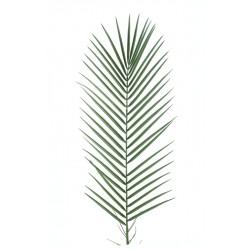 Phoenix palm plastique