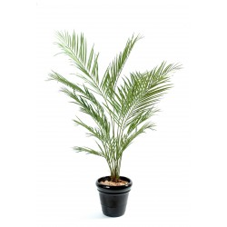Kentia artificiel New Palm
