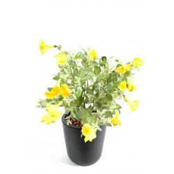 Pétunia en piquet artificiel de 41 cm de hauteur avec des fleurs jaunes