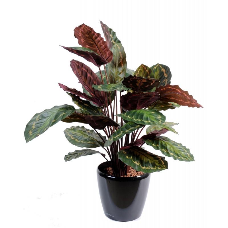Calathea roseopicta artificiel for Commander des plantes