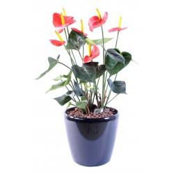 Anthurium artificiel 50 cm